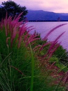 Lavender Imposter