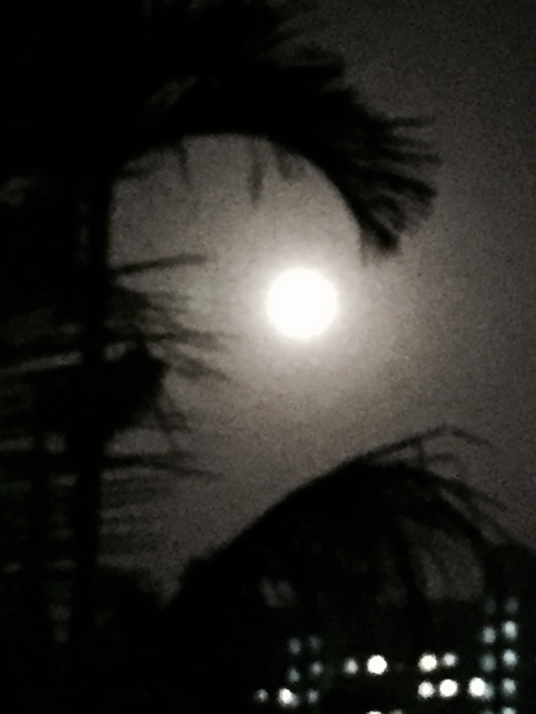 Moon, home and Palm